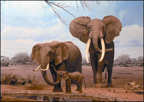 elephant-at-waterhole