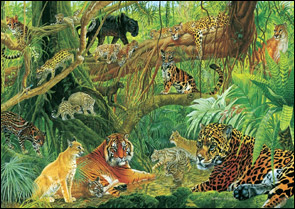 rainforest-cats