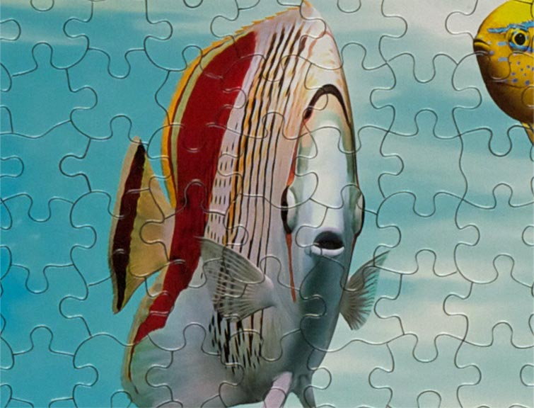 waterworld-puzzle-section