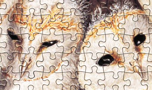 Jigsaw Puzzle by Grovely
